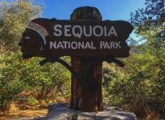 Sequoia National Park - CA